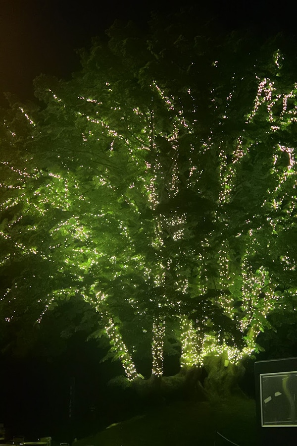 10-1 【こどもフジロック】FUJI ROCK FESTIVAL'18子連れフェス体験記〜3歳児との過ごし方〜
